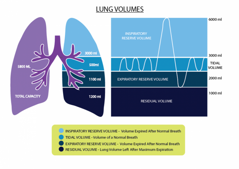 Lovely Lungs
